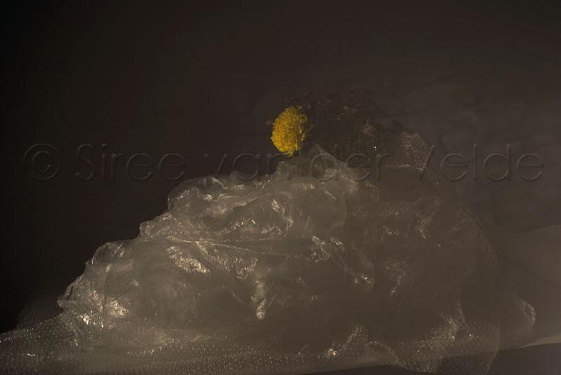compositie-gele-bloem