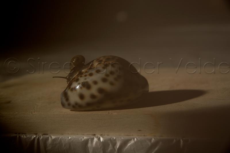slak-op-schelp